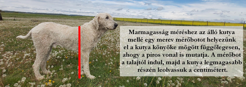 marmagassag-1